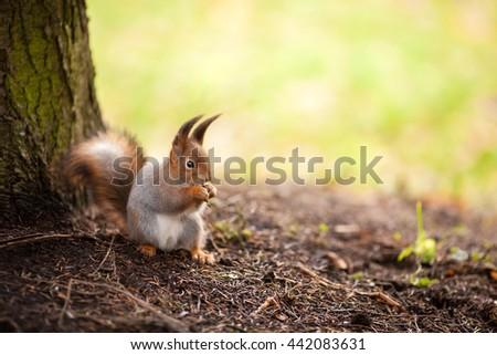 Squirrel eats seeds #442083631