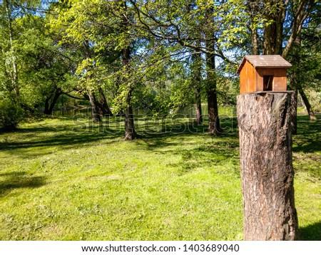 Squirrel house in spring forest park landscape. Squirrel house in forest. Squirrel house in forrest scene. Spring forest squirrel house view