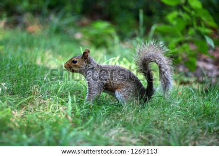 squirrel in central park new york