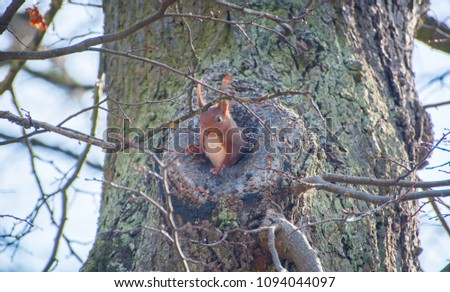 Squirrel in it's tree cave