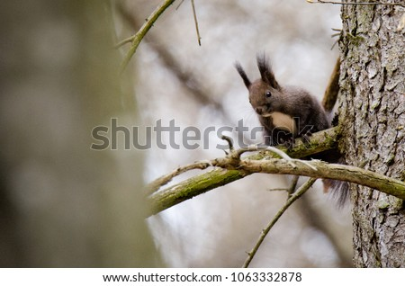 squirrel in the forest #1063332878