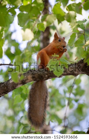 Squirrel in the forest on a tree