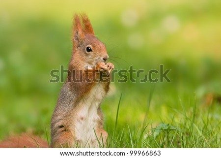 squirrel in the spring - stock photo