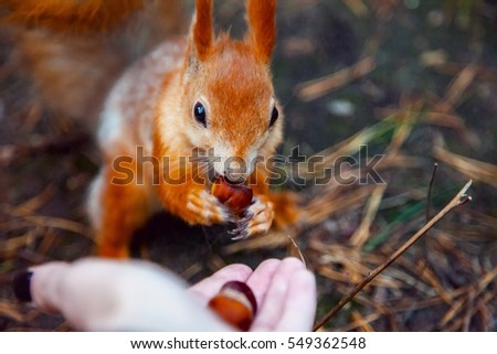 squirrel in the woods eating nuts #549362548