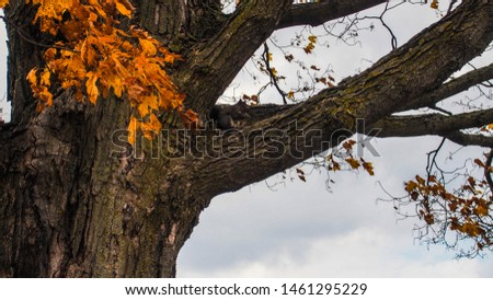 squirrel in tree, fall tree #1461295229