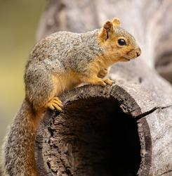 Squirrel is common wild animal