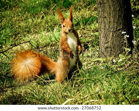 Squirrel near tree