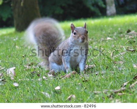 Squirrel Nutkin
