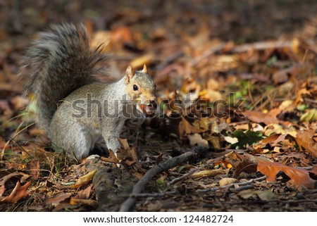 squirrel of the Central park. Manhattan. New York. The USA