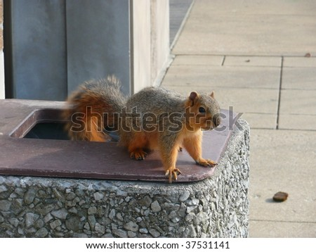 Squirrel on a trash receptacle