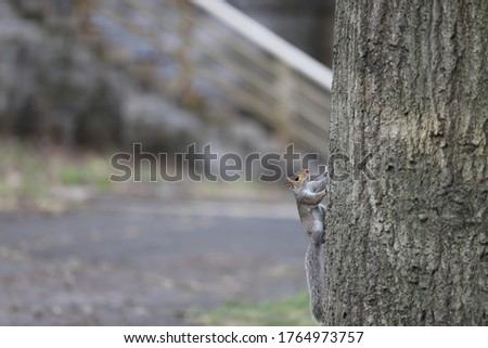 Squirrel on a tree chillen out  Stockfoto ©