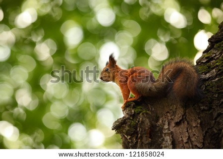squirrel on a tree on a green background #121858024