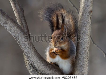 squirrel on a tree with a nut