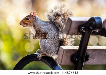 Squirrel on bench in the park. #114876613