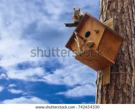Squirrel on squirrel tree house on a background of blue with clouds. Squirrel in the Park eating a nut. #742654330