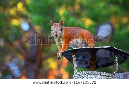Squirrel on the chimney.