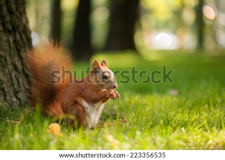 Squirrel on the grass. closeup #223356535