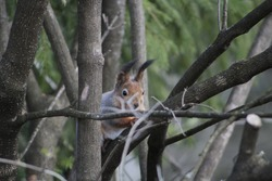 Squirrel on the tree. High quality photo, Selective focus