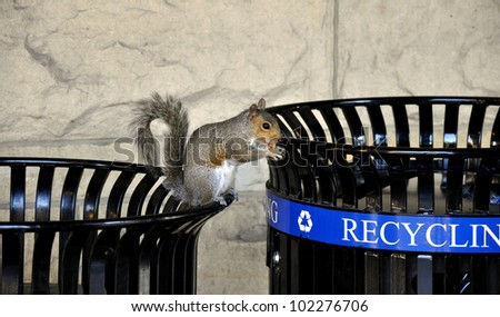 Squirrel on trash bin