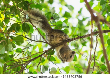 squirrel on tree, the squirrel in nature, animal in wild life