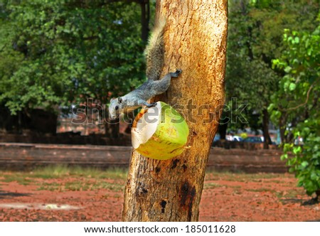 Squirrel or small gong, Small mammals native to the tropical forests at Thailand, Variable squirrel, Pallas\'s squirrel