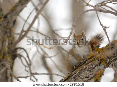 Squirrel perched on a branch with space for text on the left.