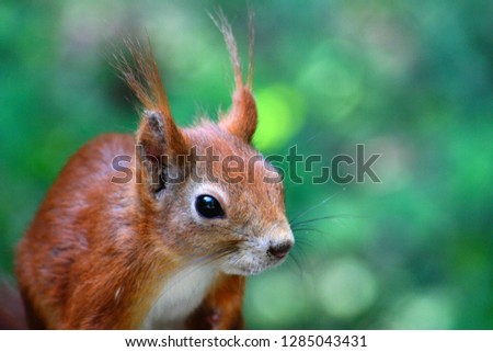 squirrel pets nature   photo