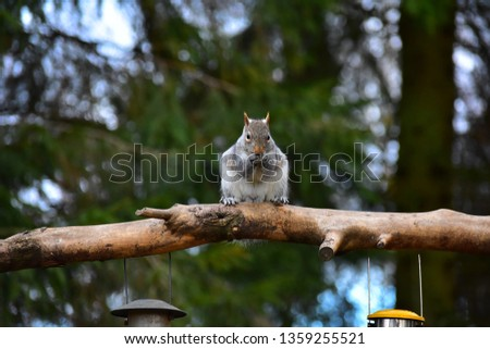 Squirrel sitting on a log eating. Beautiful photo