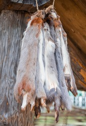 Squirrel skin hang on a on the porch of the wooden log house. Hunting and fur harvesting. Animal peltry