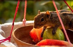 Squirrel visit to my bird feeder at my bedroom windown