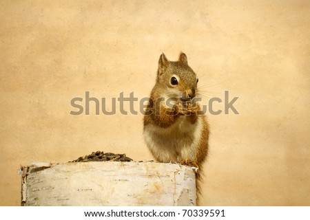 Squirrel (young) enjoying sunflower seeds on birch log with copy space.