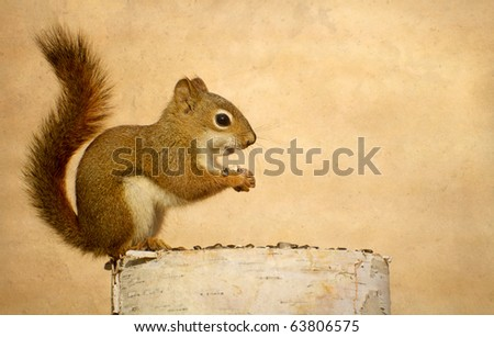 Squirrel  (young) on birch log enjoying some sunflower seeds in the autumn on a warm background with copy space.