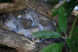 "Squirrels enjoying some time ""alone"""