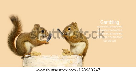 Squirrels playing cards for peanuts.  Part of a fun series.