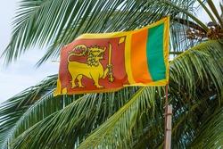 Sri Lanka national flag on a background of palm trees on a bamboo flagpole.
