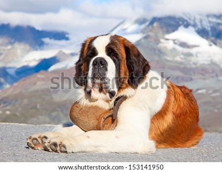 St. Bernard Dog with keg ready for rescue operation #153141950