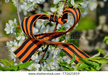 St. George ribbon on a blossoming apple tree. Spring of Victory. Victorious may. Closeup. May 9 - Victory Day #772621819
