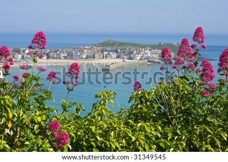 St. Ives wild red Valerian (Centranthus ruber), Cornwall UK.