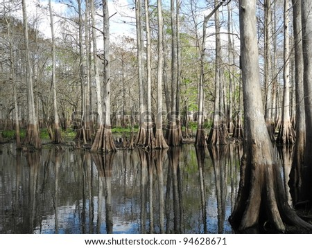 St. Johns River Swamp  Florida