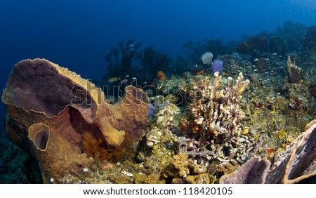 St. Lucia Reef Scene Wide Angle