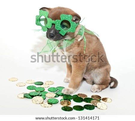 St. Patrick's Day puppy wearing sunglasses with coins all around him. - stock photo