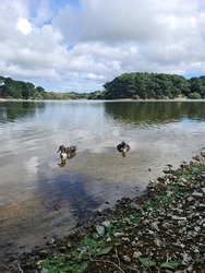St Saviours Reservoir, Guernsey Channel Islands
