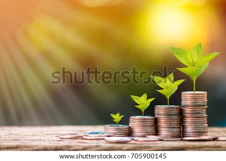 Stack gold coins and plant with growing for saving money put on the wood in the morning sunlight, Business investment concept.