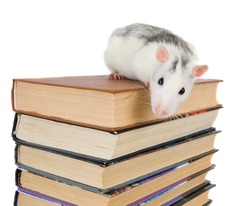 Stack of books and rat isolated