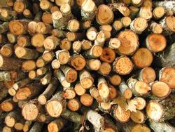 Stack Of Circular Chopped Wood
