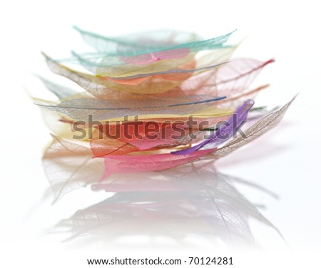 stack of colorful Skeleton leaves