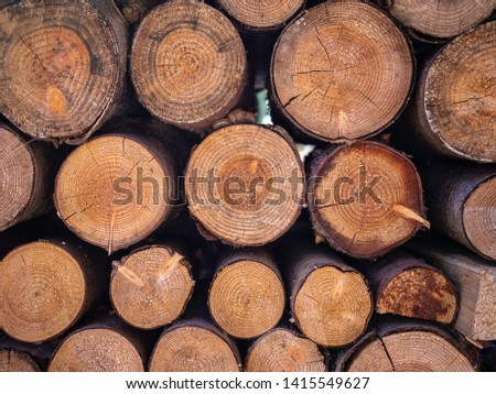 Dendrochronology dating