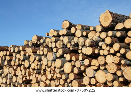Stack of cut timber logs against clear blue sky.