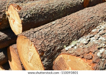 stack of cut trees in a forest for background - stock photo