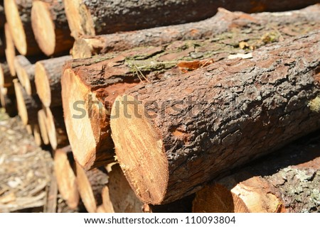 stack of cut trees in a forest for background